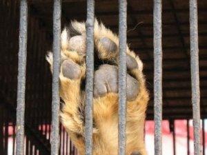 Imagen del post http://animalialatina.wordpress.com/2012/02/14/queremos-jaulas-vacias/