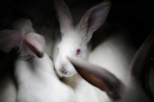 Granjas de conejos Igualdad Animal