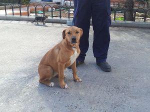 Senda, una de las perras recogidas en Vega del Henares